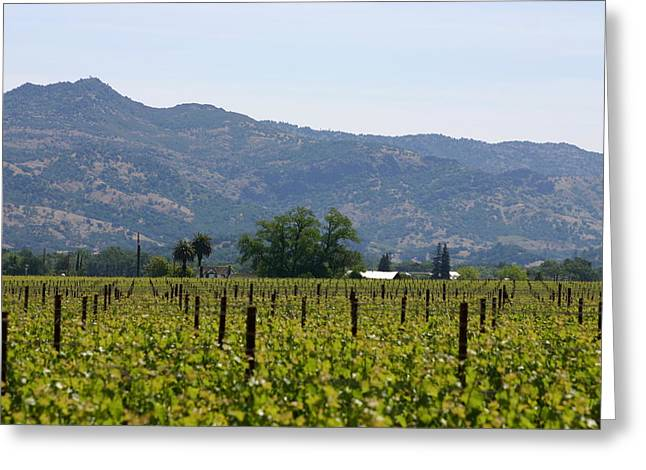 Beautiful Scenery Greeting Cards - View of the Vineyards Greeting Card by Jen VerMaas