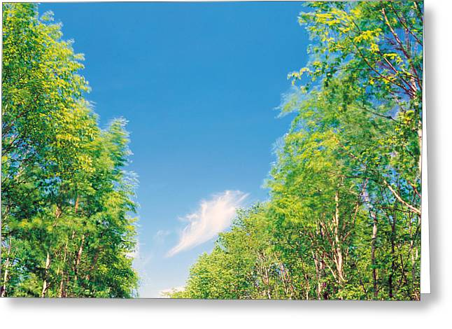 Height Greeting Cards - View Of Trees Against Blue Sky Greeting Card by Panoramic Images