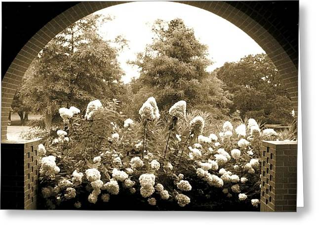 View To The Garden Greeting Card by Darla Wood