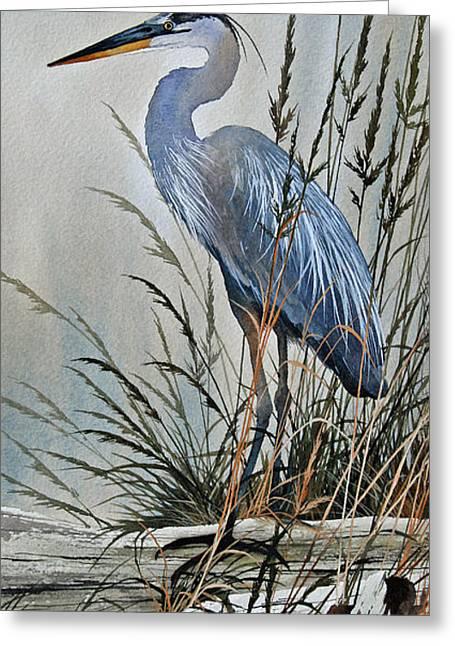 Shore Bird Print Greeting Cards - Vigil Along the Shore Greeting Card by James Williamson