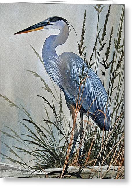 Shore Bird Print Greeting Cards - Vigil Along the Shore Greeting Card by James Williamson