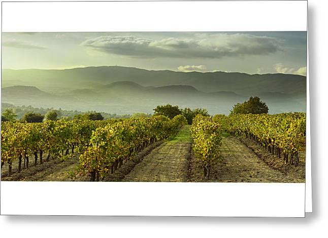Vineyards Pyrography Greeting Cards - Vignes en Luberon 2 Greeting Card by Gilles Lougassi