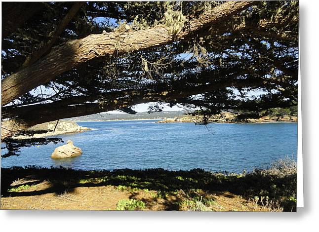 Point Lobos Greeting Cards - Vignette Greeting Card by Shannon Grissom
