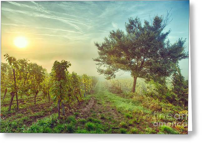 Vineyards Of Alsace Photographs Greeting Cards - Vignoble alsacien Greeting Card by Bach Jockers Pia