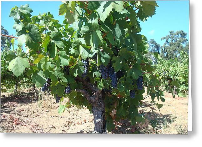 Villa Toscano Vineyards Greeting Card by Susan Woodward
