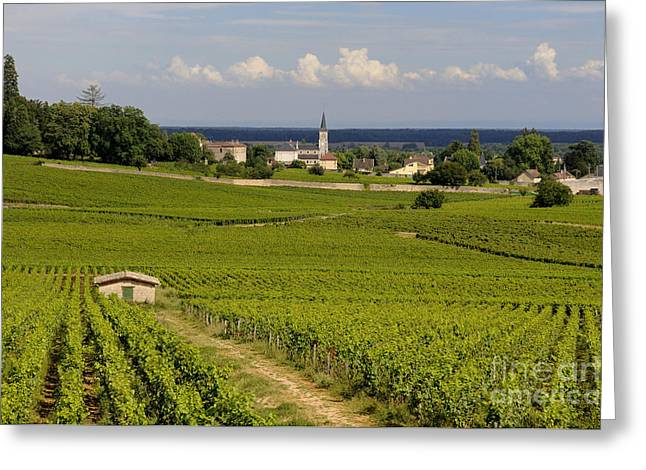 Village Of Aloxe Corton. Cote D'or. Burgundy. France Greeting Card by Bernard Jaubert