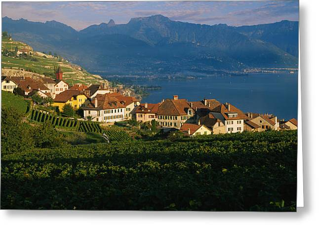 Vineyard Scene Greeting Cards - Village On A Hillside, Rivaz, Lavaux Greeting Card by Panoramic Images