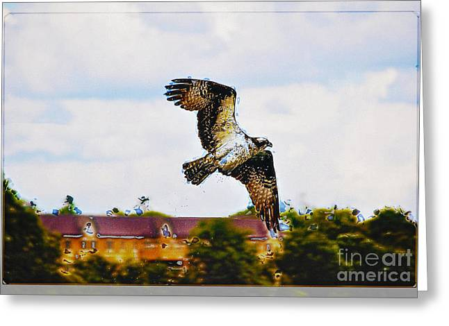 Hovering Mixed Media Greeting Cards - Village Osprey Greeting Card by Skye Ryan-Evans