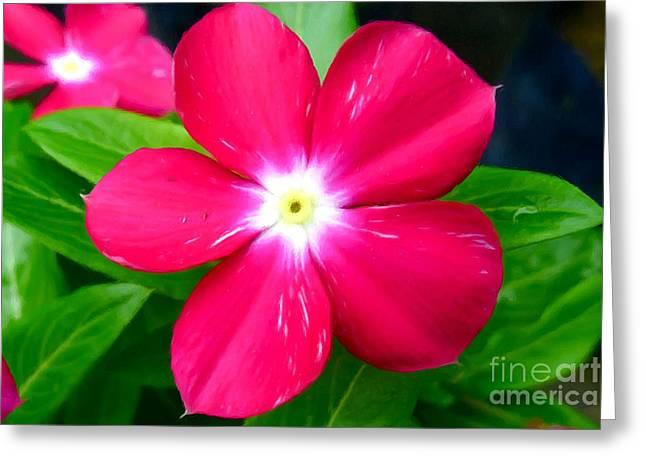 Vinca Flowers Greeting Cards - Vinca flower Greeting Card by Lanjee Chee