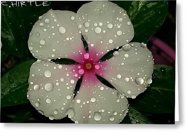 Vinca Flowers Greeting Cards - Vinca Rain Greeting Card by Christine  Hirtle