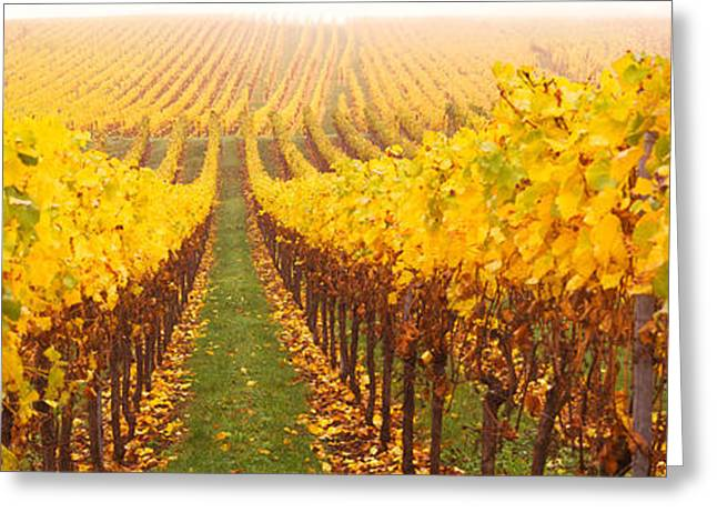 Grapevine Greeting Cards - Vine Crop In A Vineyard, Riquewihr Greeting Card by Panoramic Images