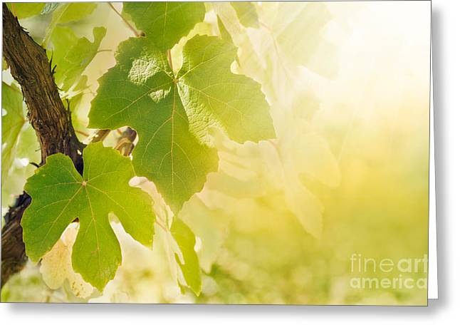Grapevine Greeting Cards - Vine leaf Greeting Card by Mythja  Photography