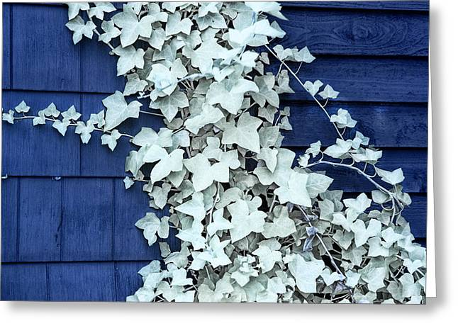 Vine Leaves Greeting Cards - Vine Leaves against a Blue Wall Greeting Card by Randall Nyhof