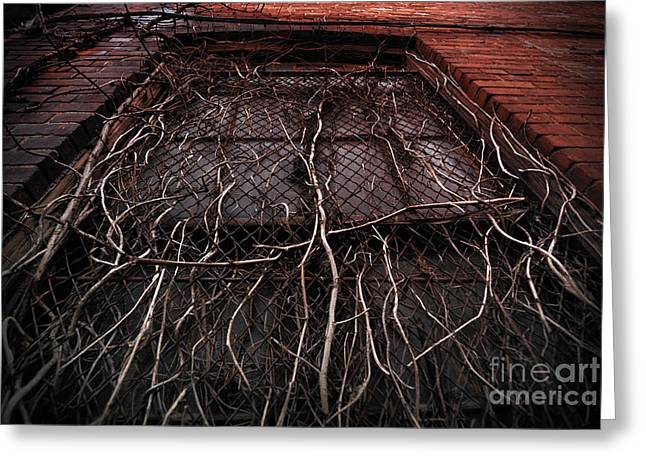 Overruns Photographs Greeting Cards - Vine of Decay 1 Greeting Card by Amy Cicconi