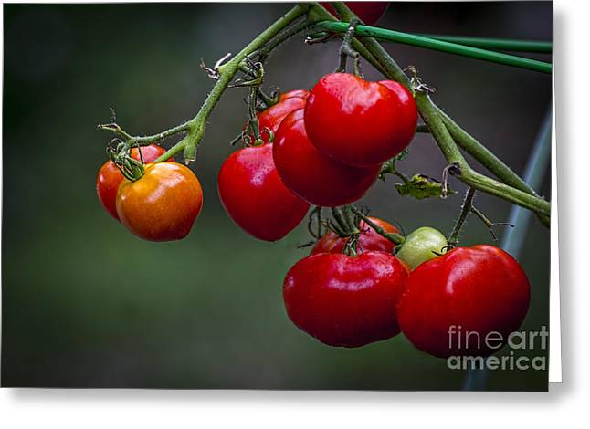 Vines Greeting Cards - Vine Ripe Goodies  Greeting Card by Marvin Spates