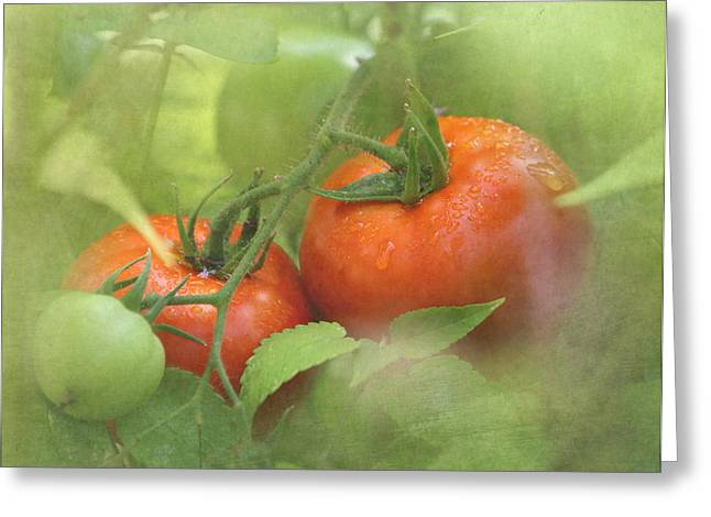 Fruit On The Vine Greeting Cards - Vine Ripened Tomatoes Greeting Card by Angie Vogel