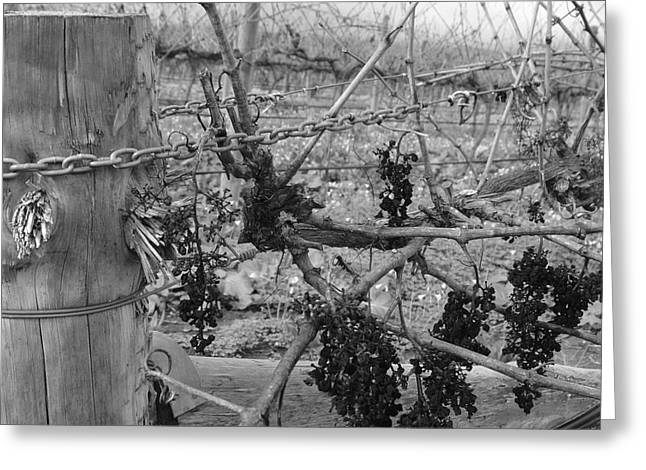 Vale Greeting Cards - Vineart B W . Vat 1.3 Greeting Card by Cheryl Miller
