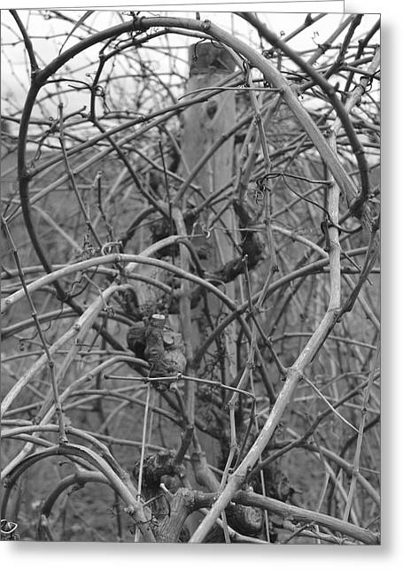 Vale Greeting Cards - Vineart B W . Vat 1.5 Greeting Card by Cheryl Miller