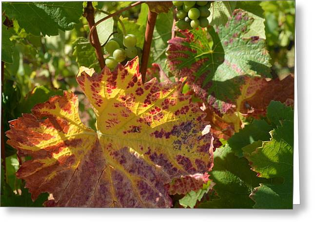 Red Wine Prints Greeting Cards - Burgundy Vines 1.1 Greeting Card by Cheryl Miller