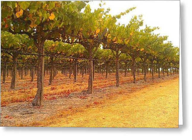 Vines Aligned Greeting Card by CML Brown