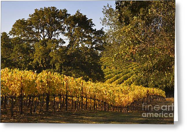 Alexander Valley Greeting Cards - Vines and Oaks Alexander Valley Greeting Card by Craig Lovell