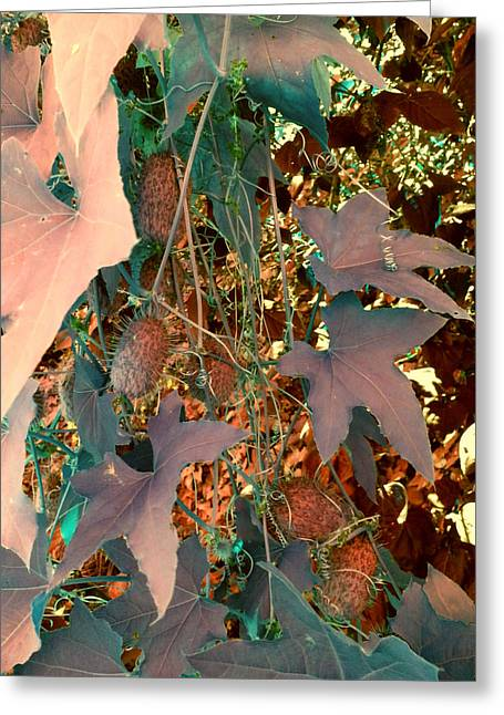 Vines And Things Greeting Card by Joanne Smoley