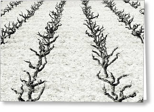 Vines Greeting Card by Frank Tschakert