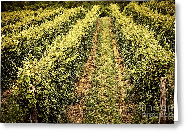Vineyard Photographs Greeting Cards - Vines growing in vineyard Greeting Card by Elena Elisseeva