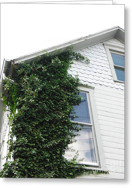 Take Over Greeting Cards - Vines On The Corner Greeting Card by Paddy Shaffer