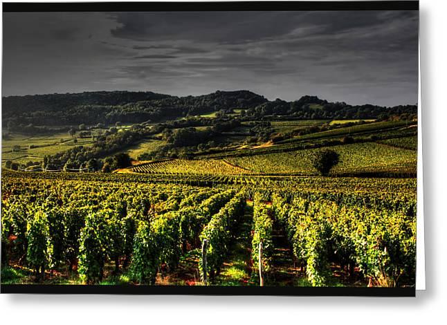Vineyard Art Greeting Cards - Vines in France Greeting Card by Tom Prendergast