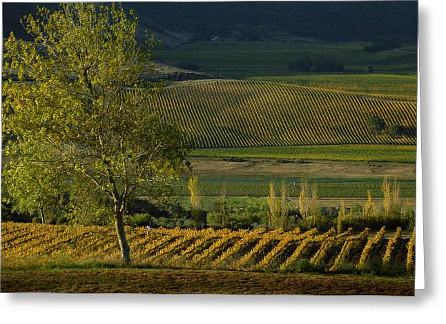 Vineyards Pyrography Greeting Cards - Vineyard 001 Greeting Card by Victor Boghossian