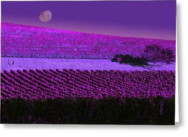 Northern California Vineyards Greeting Cards - Vineyard 40 Greeting Card by Xueling Zou