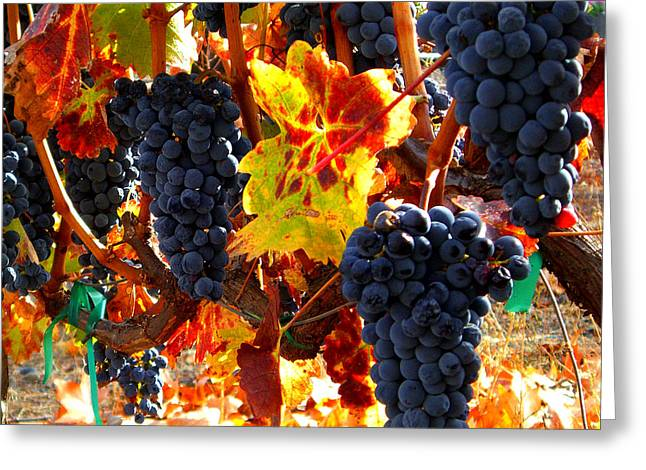 Blue Grapes Greeting Cards - Vineyard 8 Greeting Card by Xueling Zou