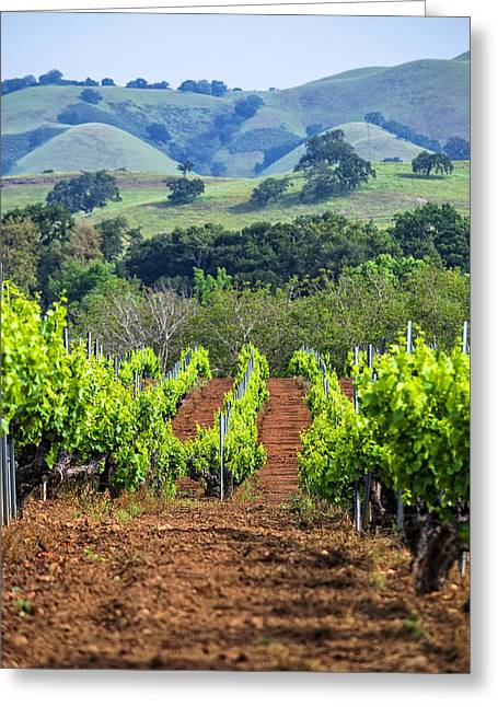 Metal Vineyard Print Greeting Cards - Vineyard and Rolling Hills Greeting Card by L J Oakes