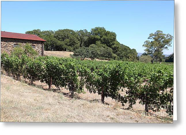 Vineyard and Stallion Barn At Historic Jack London Ranch In Glen Ellen Sonoma California 5D24579 Greeting Card by Wingsdomain Art and Photography