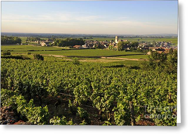 Vineyard and village of Pommard. Cote d'Or. Route des grands crus. Burgundy.France. Europe Greeting Card by BERNARD JAUBERT