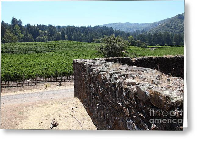 Vineyard And Winery Ruins At Historic Jack London Ranch In Glen Ellen Sonoma California 5d24537 Greeting Card by Wingsdomain Art and Photography