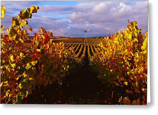 California Vineyard Greeting Cards - Vineyard At Napa Valley, California, Usa Greeting Card by Panoramic Images