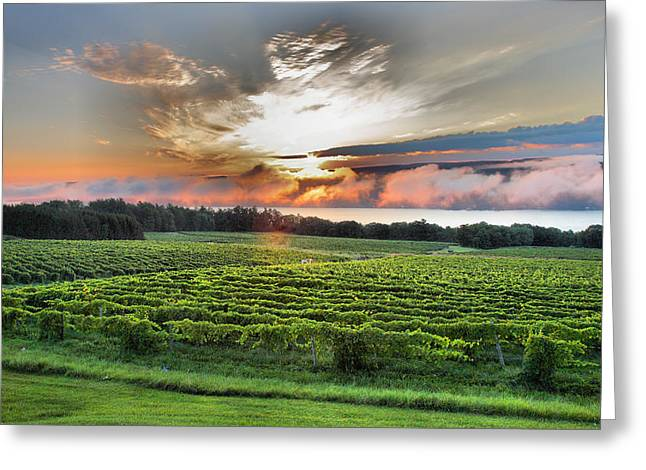 Vineyard Prints Greeting Cards - Vineyard At Sunrise Greeting Card by Steven Ainsworth