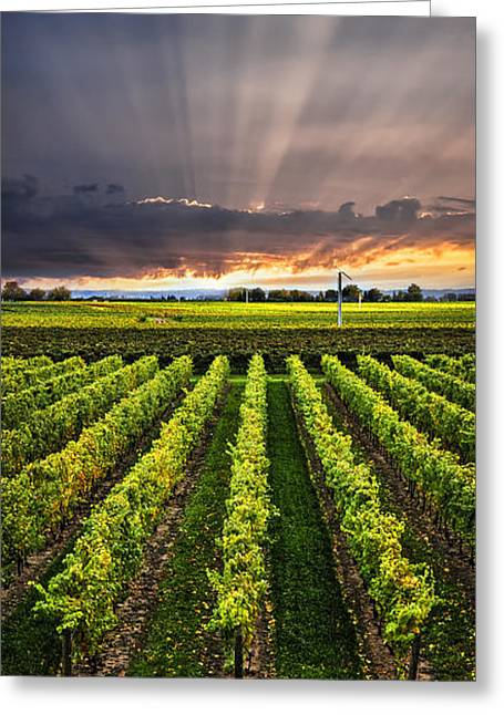 Wines Greeting Cards - Vineyard at sunset Greeting Card by Elena Elisseeva