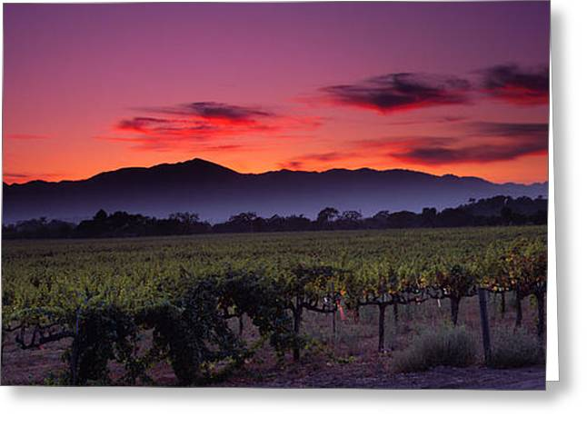 Napa Valley Vineyard Greeting Cards - Vineyard At Sunset, Napa Valley Greeting Card by Panoramic Images