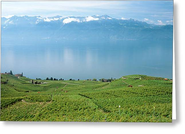 Vineyard At The Lakeside, Lake Geneva Greeting Card by Panoramic Images