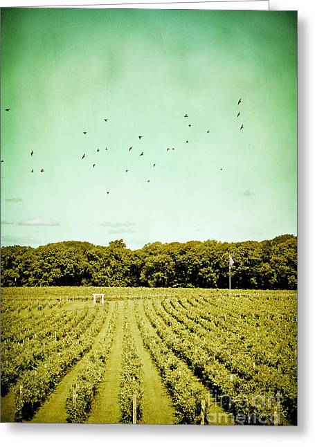 Winery Photography Greeting Cards - Vineyard Greeting Card by Colleen Kammerer