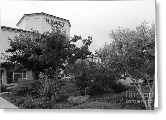 Hyatt Hotel Greeting Cards - Vineyard Creek Hyatt Hotel Santa Rosa California 5D25795 bw Greeting Card by Wingsdomain Art and Photography