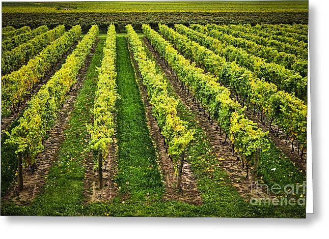 Winemaking Photographs Greeting Cards - Vineyard Greeting Card by Elena Elisseeva
