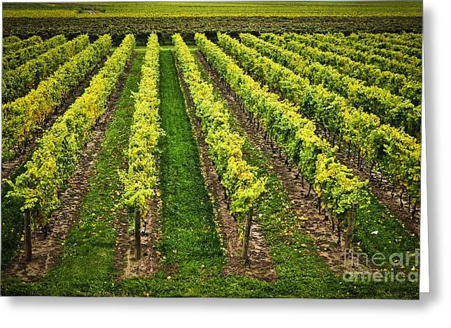 Vineyard Greeting Card by Elena Elisseeva