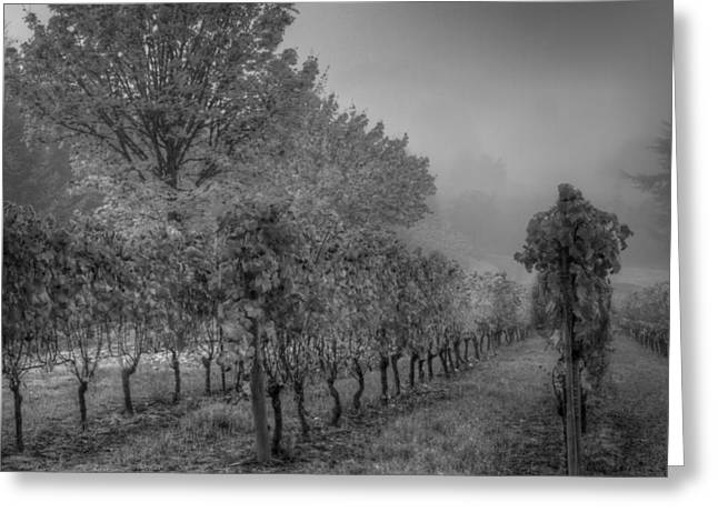 Winemaking Greeting Cards - Vineyard Fog Greeting Card by Jean Noren