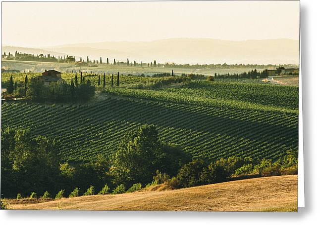 Vineyard From Above Greeting Card by Clint Brewer