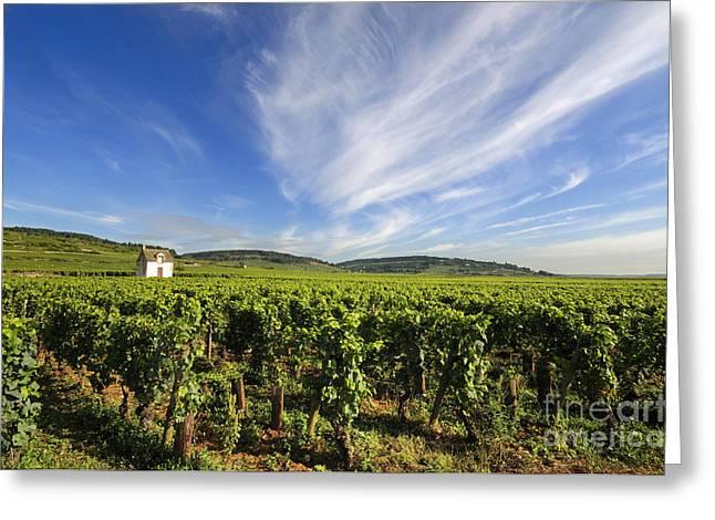 Cote De Beaune Greeting Cards - Vineyard hut. vineyard. Cote de Beaune. Burgundy. France. Europe Greeting Card by Bernard Jaubert