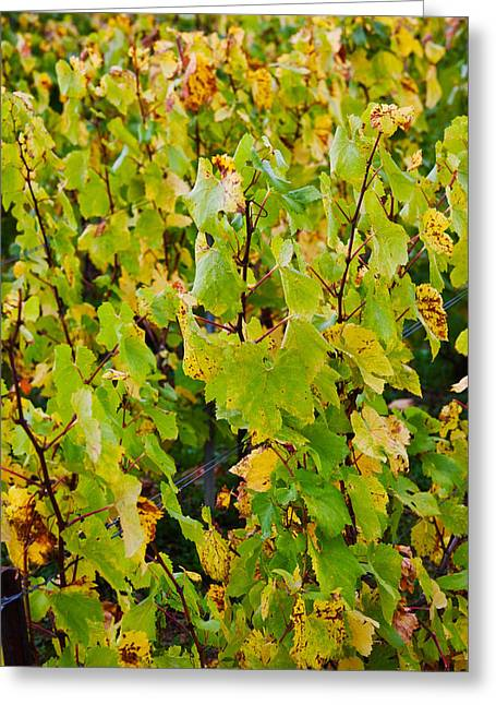 Les Greeting Cards - Vineyard In Autumn, Chigny-les-roses Greeting Card by Panoramic Images